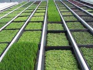 Бизнес план по выращиванию зелени круглый год